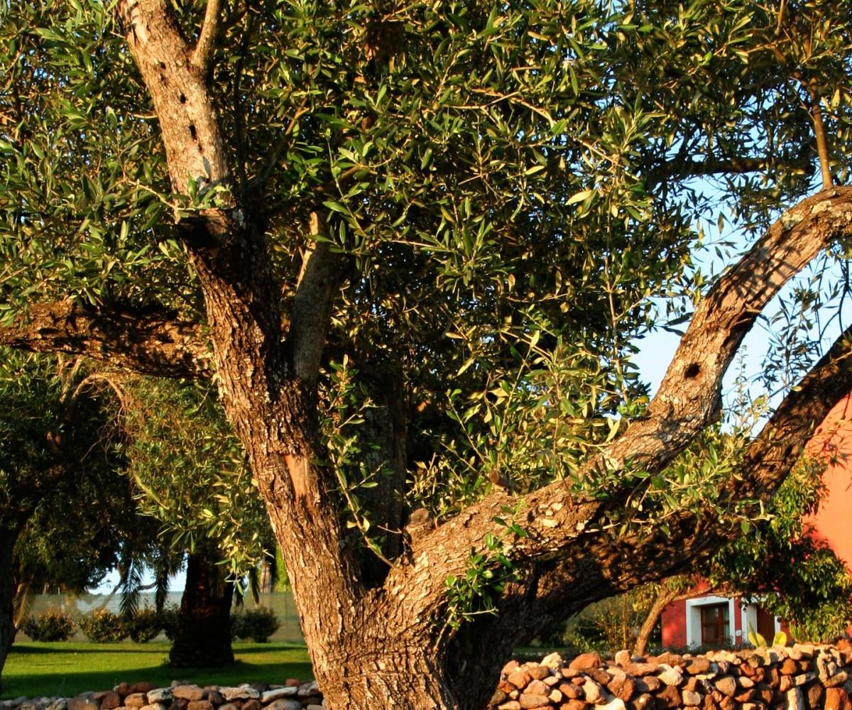 04-Alghero_Resort_Country_Hotel-I-Giardini-001