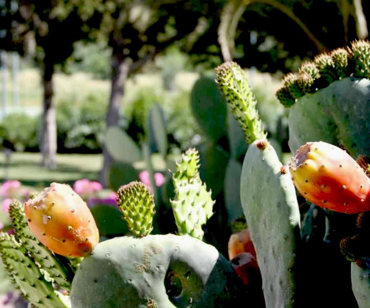08-Alghero_Resort_Country_Ambiente-03