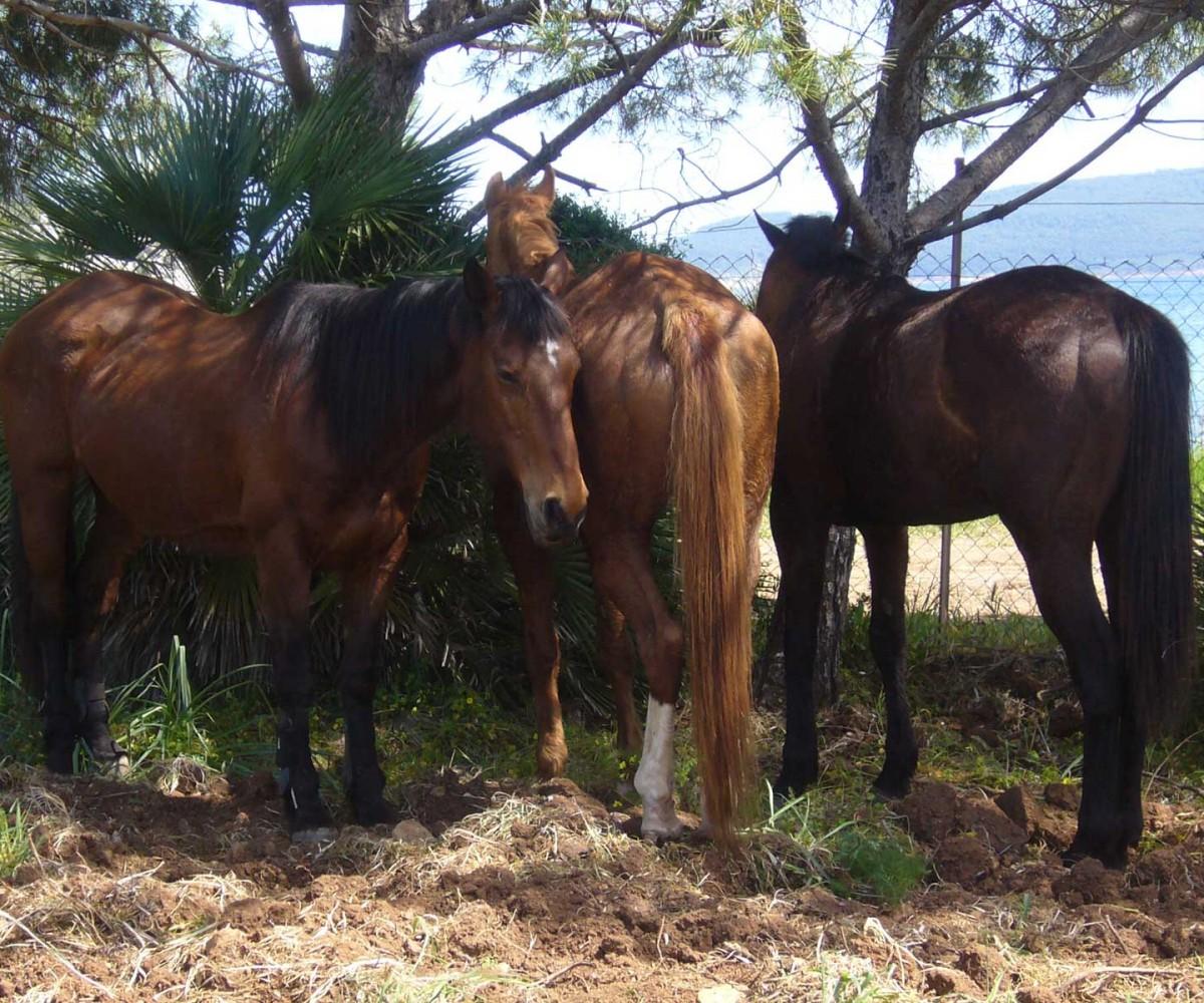 algheroresort-horseriding-001