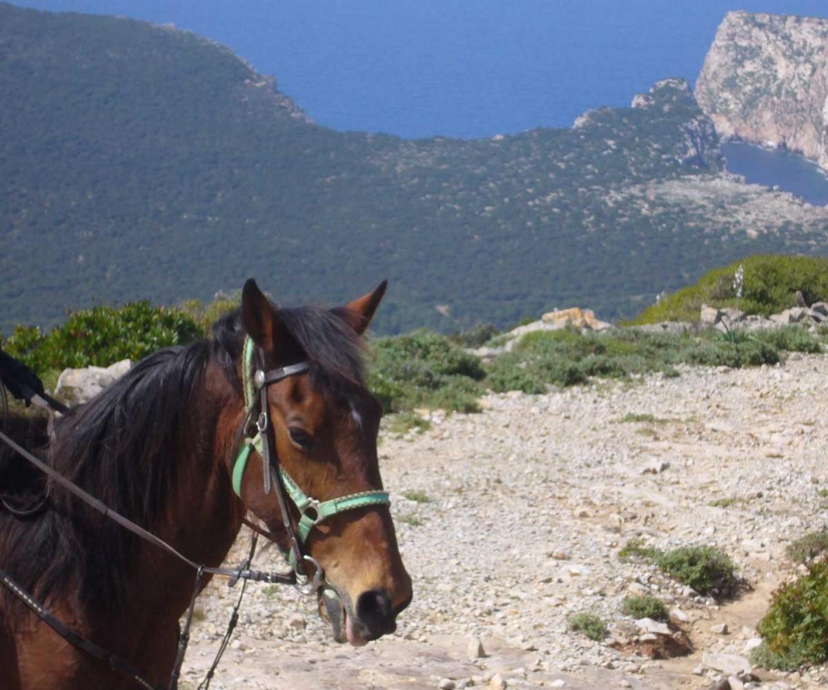 algheroresort-horseriding-002